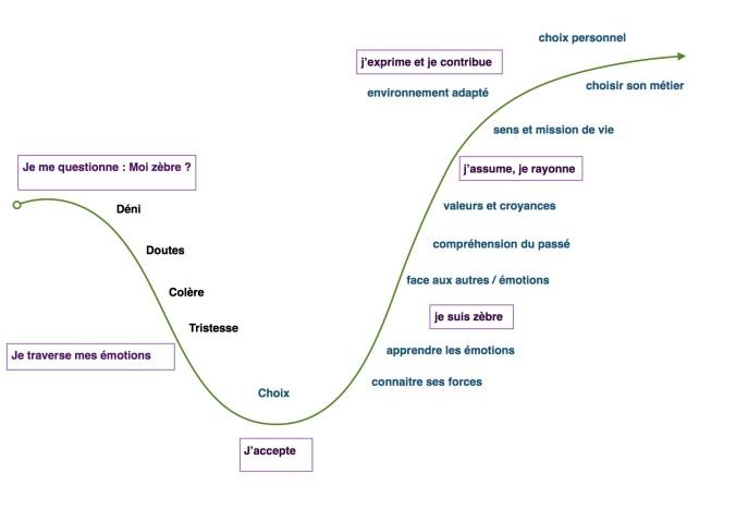 schéma étapes du zèbres